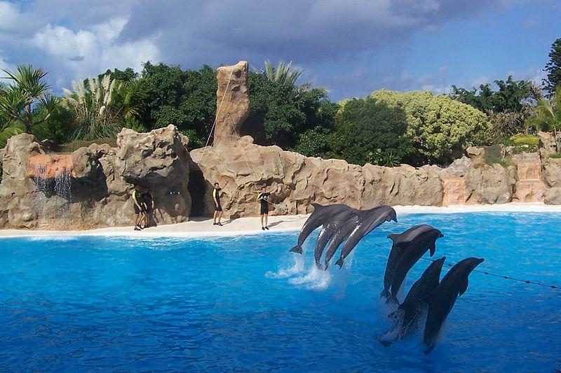 Penguin House, Loro Parque