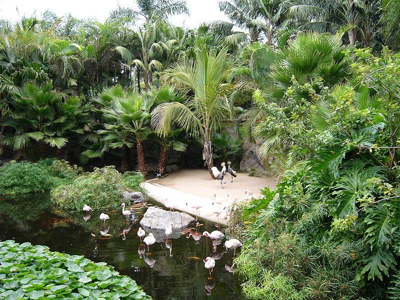 Flamingos, Loro Park