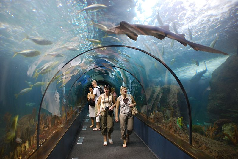 Shark Tunnel, Loro Parque
