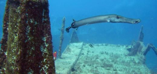 scuba-diving-tenerife